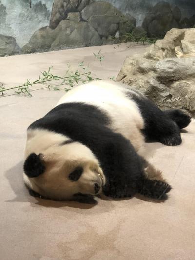 2018,9月 No.5 ANAマイレージでワシントンに行って、HGVに泊ってみた。スミソニアン国立動物園でパンダをゆっくり見ました編 帰国編