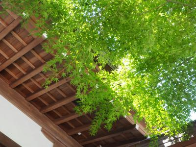 龍峰院 建長寺塔頭の一つ。鎌倉三十三観音巡りで初めて訪れ緊張! こちらもご詠歌を手書きして頂けます。