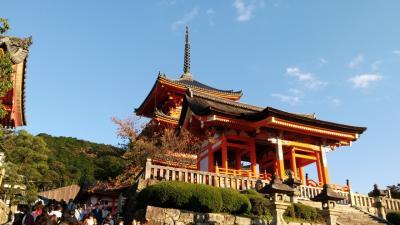 仕事ではありますが。。。 関西をまわり関東へ。前半京都、奈良編。