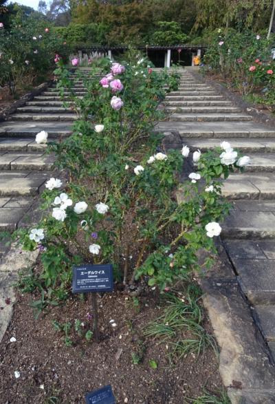 夙川から、憩いの西宮北山緑化植物園へ