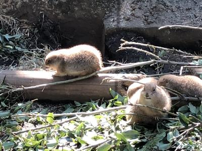 上野公園/上野動物園と国立科学博物館