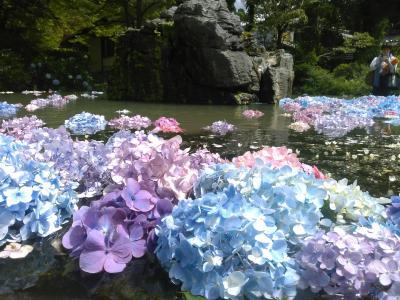 池田 久安寺のアジサイ +とある休日の出来事(関西編Ver.2)