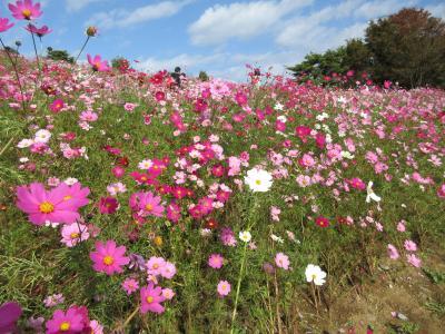 初秋の国営昭和記念公園散策