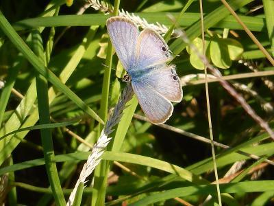 所沢市南永井付近の風景②蝶が見られました
