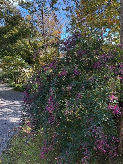 福岡から車で高千穂へ。泊まりは黒川温泉、阿蘇内牧温泉。母と娘の秋ドライブ(1)
