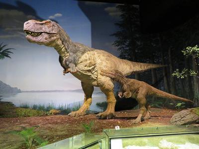 あげあげの鉱物標本と動く恐竜ちゃん