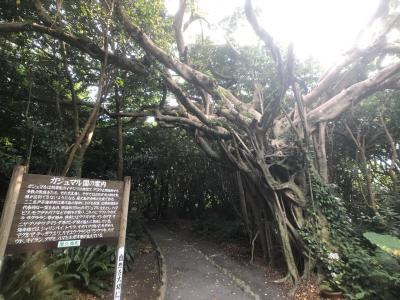 屋久島で亀の手とガジュマル