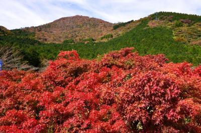 鶴見岳の紅葉 2018
