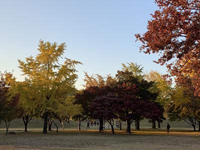 2018年11月慶州の紅葉を楽しむ旅①