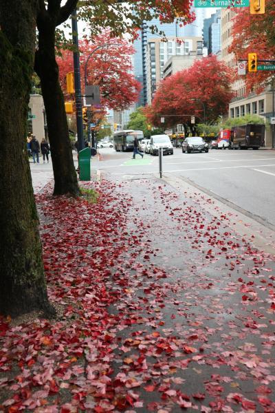 紅葉まっさかりのバンクーバー滞在記