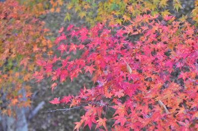 山中湖の紅葉(渚祭り)