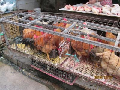 上海の川沙古鎮・操場街・食材市場街