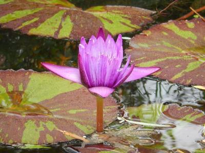11月4日池袋西武百貨店の「食と緑の空中庭園・・睡蓮の庭」を訪問