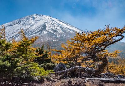 2018年山中湖ロッジ滞在記(5)10月編その2 富士山5合目のオブジェのようなカラマツ