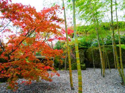 紅葉の遠足☆箱根美術館のお庭歩き