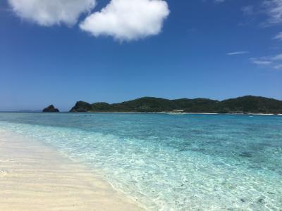 ☆ウミガメに会いたい!座間味島☆ 2018 7月