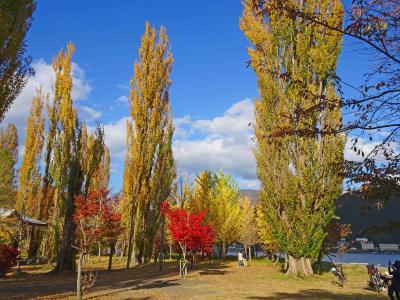 河口湖、大池公園のポプラ