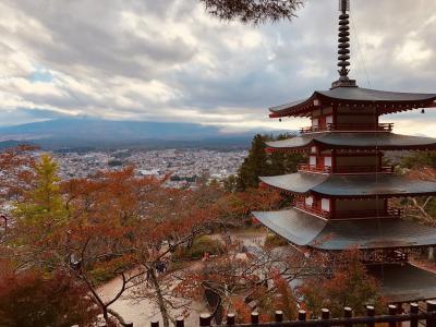 富士望む新倉山浅間公園の紅葉&絶景!河口湖もみじ回廊 世界遺産・忍野八海と名物ほうとう不動で昼食