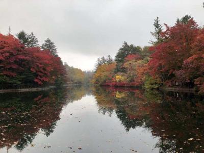 軽井沢は紅葉真っ盛り! だけど寒い寒い、ほんっと寒い。