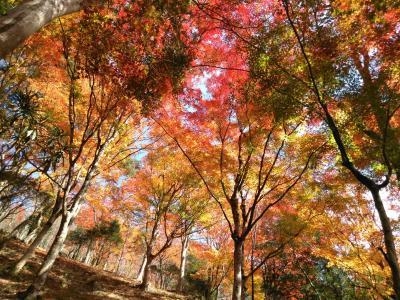 「稲武」 超絶景!大井平公園の紅葉日帰り旅