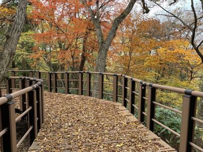 国立公園大山  大山森の遊歩道