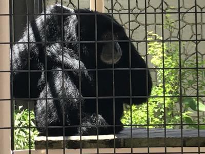 初めての東山動物園