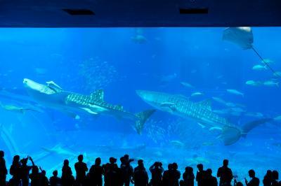 沖縄の海と山の自然の休暇②