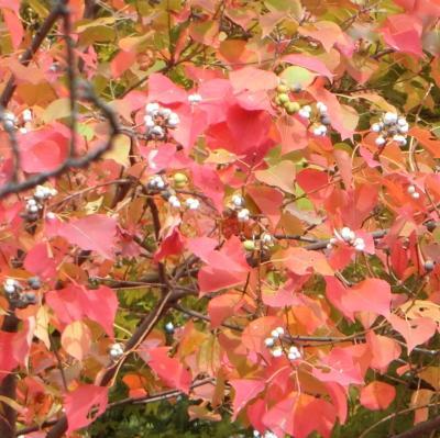 倉敷美観地区の紅葉は美しい