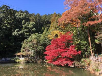 天気が良いので宍粟市(しそうし)の紅葉巡りに出かけてきました。