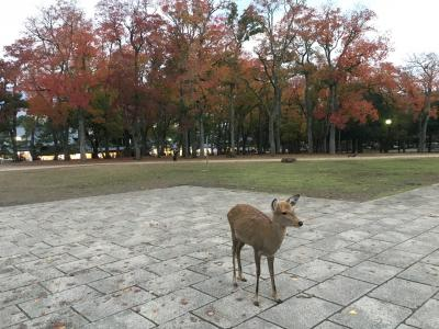 2018年11月 奈良 正倉院展と散策