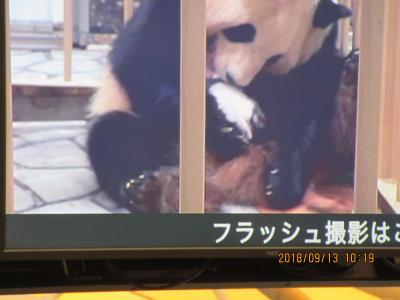 パンダの赤ちゃん公開日に! Part 1