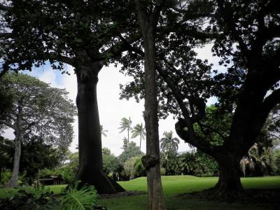 ハワイ TheBus 1-DAY PASSで植物園巡りinオアフ島1~2日目ハワイ州立美術館・フォスターボタニカルガーデンと夜に嬉しいプチ・オフ会