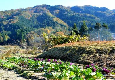 曽良山(712m)と曽木公園の紅葉