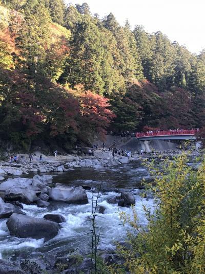 紅葉の見頃を迎えた香嵐渓