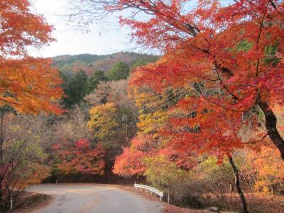 紅葉の龍王峡散策と、もみじライン(日塩有料道路)と、日光の社寺ライトアップ