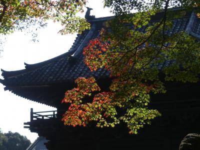 鑁阿寺の紅葉_2018_ほとんど色付いていません。(栃木県・足利市)