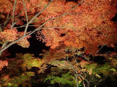 ジェットでびゅ~ん!!&レンタカー/宮城&山形定番観光地をじっくり!?+紅葉と温泉5泊6日・その1