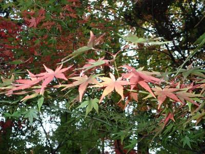 秋の深夜・早朝散歩@京都