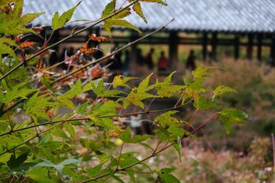コップとカーの『ちょっとそこまで♪♪』 22   京都 東福寺の紅葉はまだ・・・だった・・・