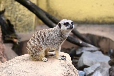 東武動物公園へ行ってきました。