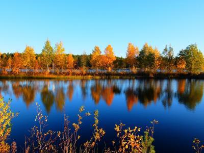 秋のフィンランド 紅葉とオーロラ イナリとヘルシンキ 旅立ち