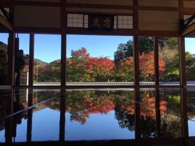 ワンコと旅行♪紅葉を求めて…群馬へ【後編】宝徳寺の床もみじ鑑賞!