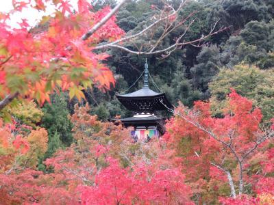 紅葉を求めて京都へ―禅林寺(永観堂)へー