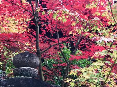 湖東三山の紅葉めぐり 「血染めの紅葉」はマジ赤い