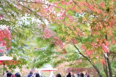 京都紅葉一人旅~清水寺~東福寺~永観堂~神護寺