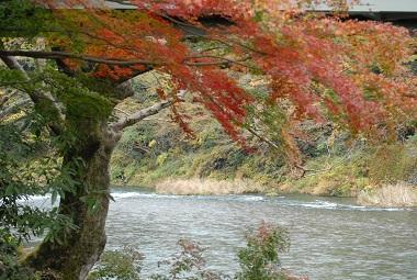 紅葉  IN  奥多摩渓谷