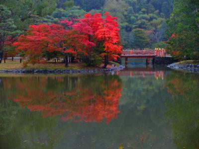橙色のいわき 池に映る秋 白水阿弥陀堂