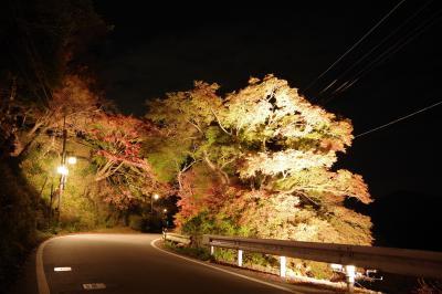 ようやく青の交響曲に乗って、青色の金峯山寺蔵王堂と紅葉ライトアップの吉野山へ