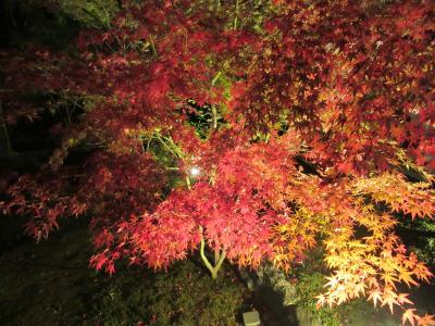 京都 紅葉ライトアップ2018 夜間拝観。