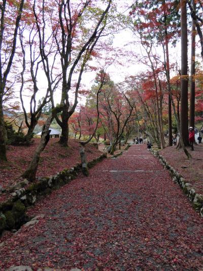 錦秋の奥琵琶湖「鶏足寺」散りモミジ・・・♪